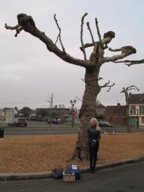 Un platane et moi-même, à IIlliers-Combray.